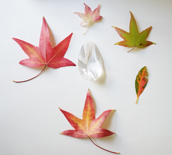 600x539 Fall Craft Ideas Leaf Drawing Tinkerlab