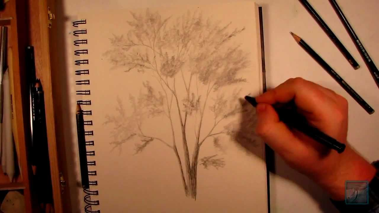 1280x720 How To Draw A Realistic Tree