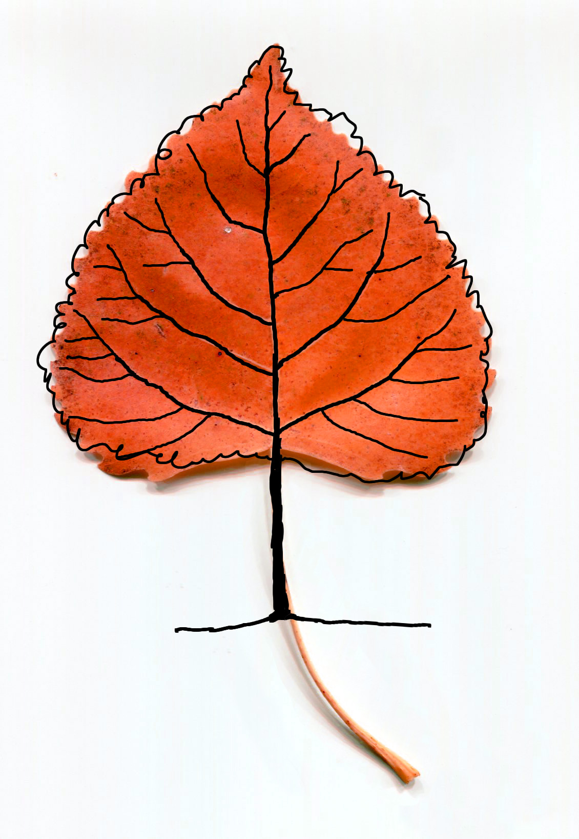 Fall Trees Drawing at GetDrawings.com | Free for personal use Fall ...