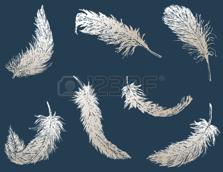 450x347 Image Of Two Flying Feathers. Royalty Free Cliparts, Vectors,