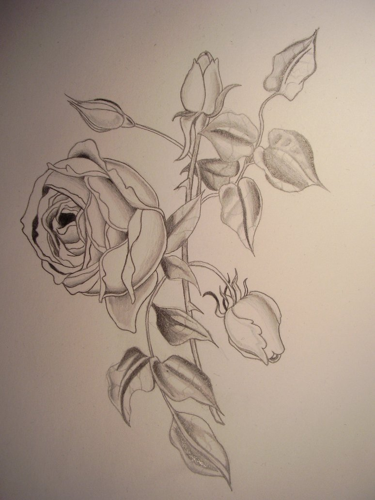 It's just a photo of Divine Rose Petal Drawing