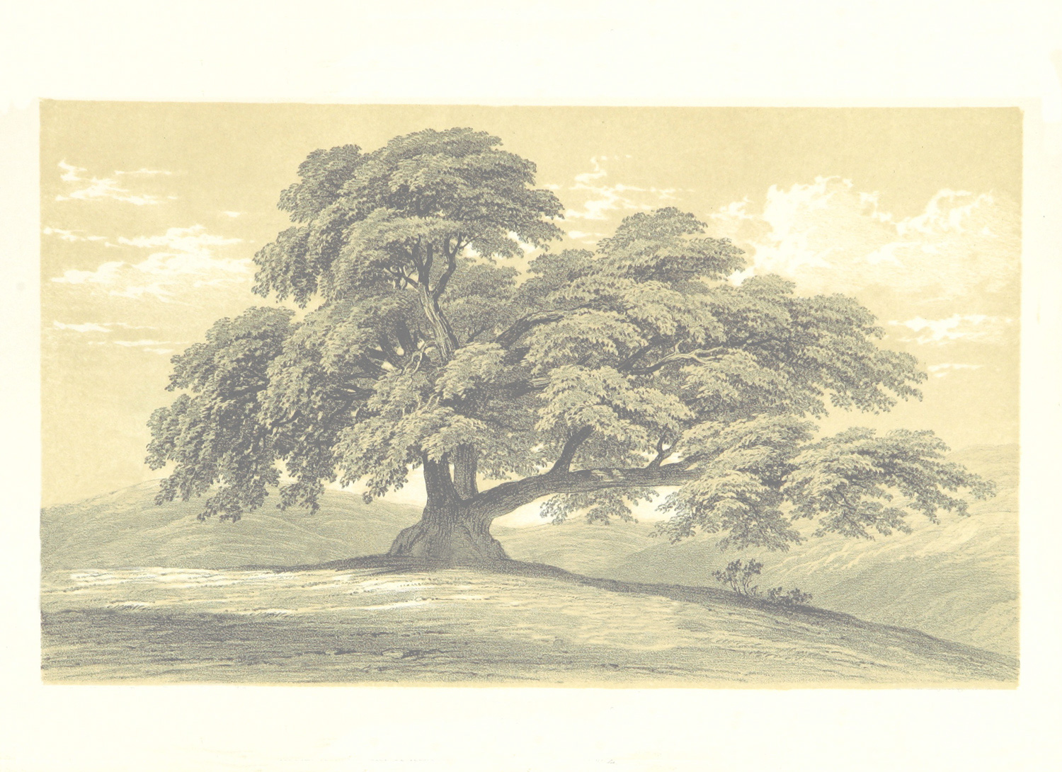 free family tree picture