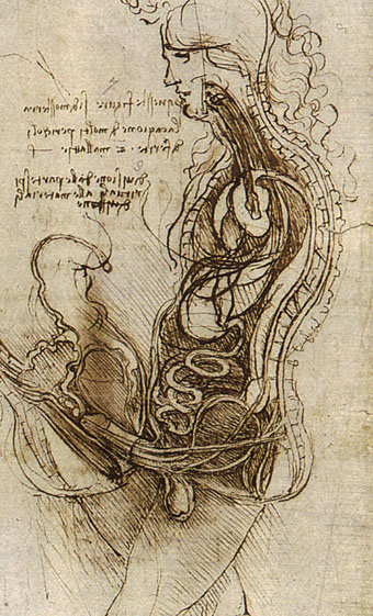 340x561 Leonardo Da Vinci Here's The Surprisingly Un Famous Drawing He