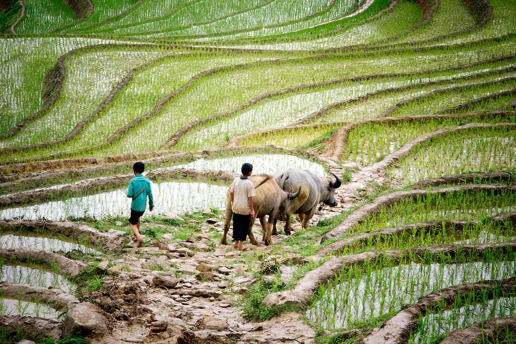 1024x683 Farmer Working In Field Drawing
