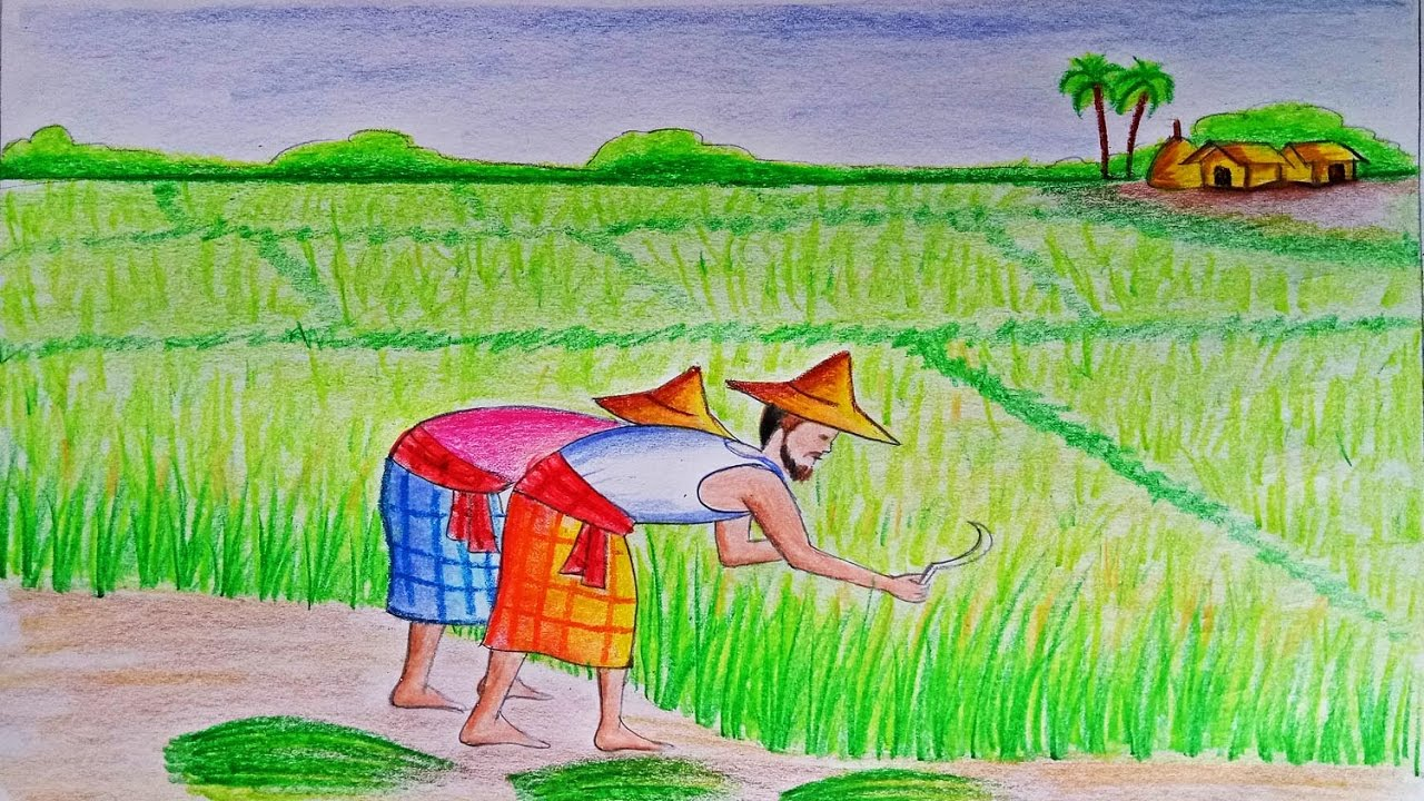 1280x720 How To Draw A Scenery Of Cultivation Step By Step (Very Easy