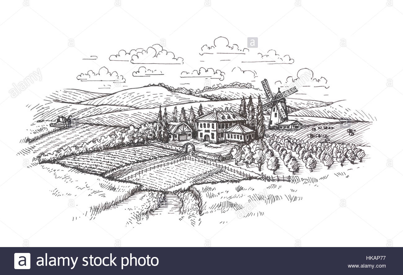 1300x886 Vintage Landscape. Farm, Agriculture Or Wheat Field Sketch Stock