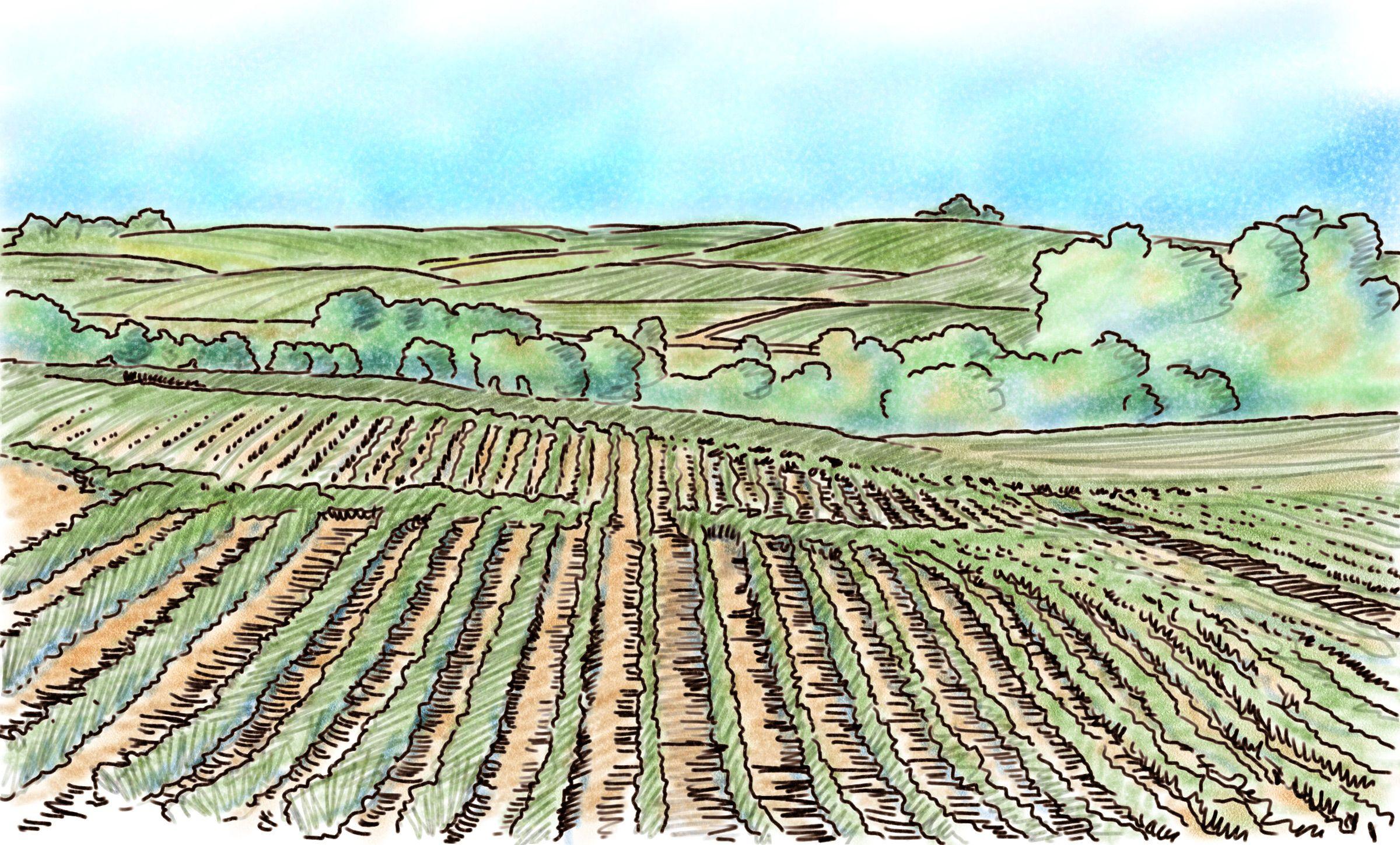 2400x1449 Augustin Luca Farm Fields.jpg Illustration 272