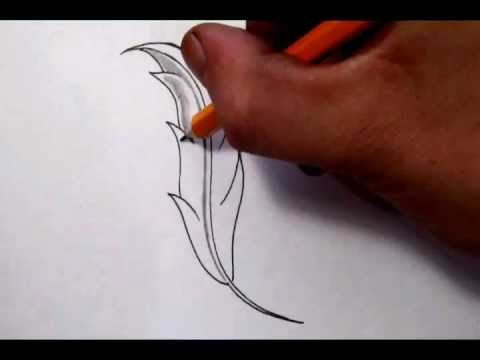 480x360 Drawing A Feather