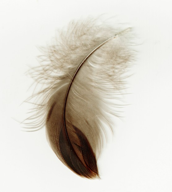 556x620 Feather Drawing Simple, Amazing Detail Ap Studio Art