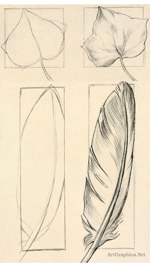 640x1136 Feather Sketch Drawings Feather Sketch, Sketches