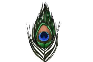 300x200 How To Draw A Peacock Feather