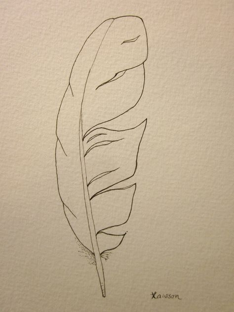 474x632 Original Ink Feather Drawing ~ 2 Sea Bird Feathers Feathers