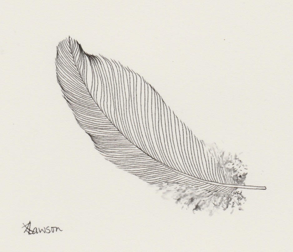 938x807 Original Ink Feather Drawing ~ Simple, Minimal Feather Drawing By