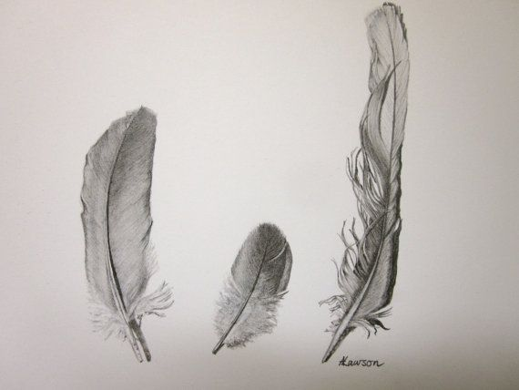 570x428 3 Feathers