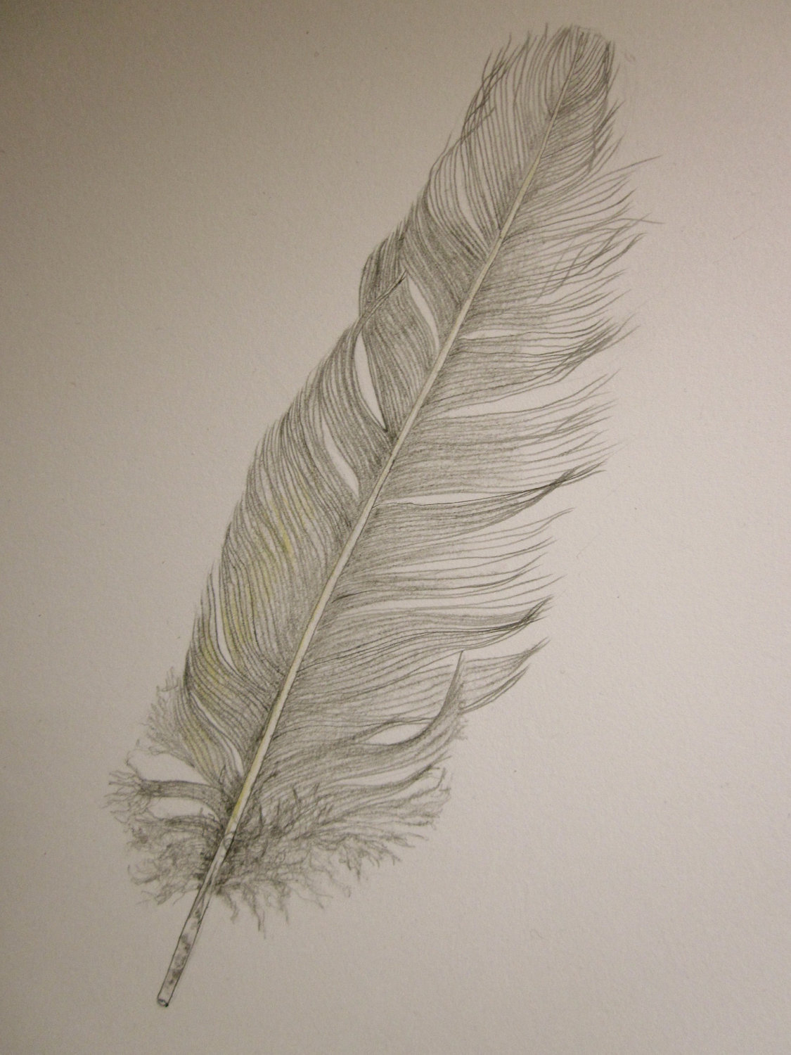 1125x1500 Cockatoo Feather