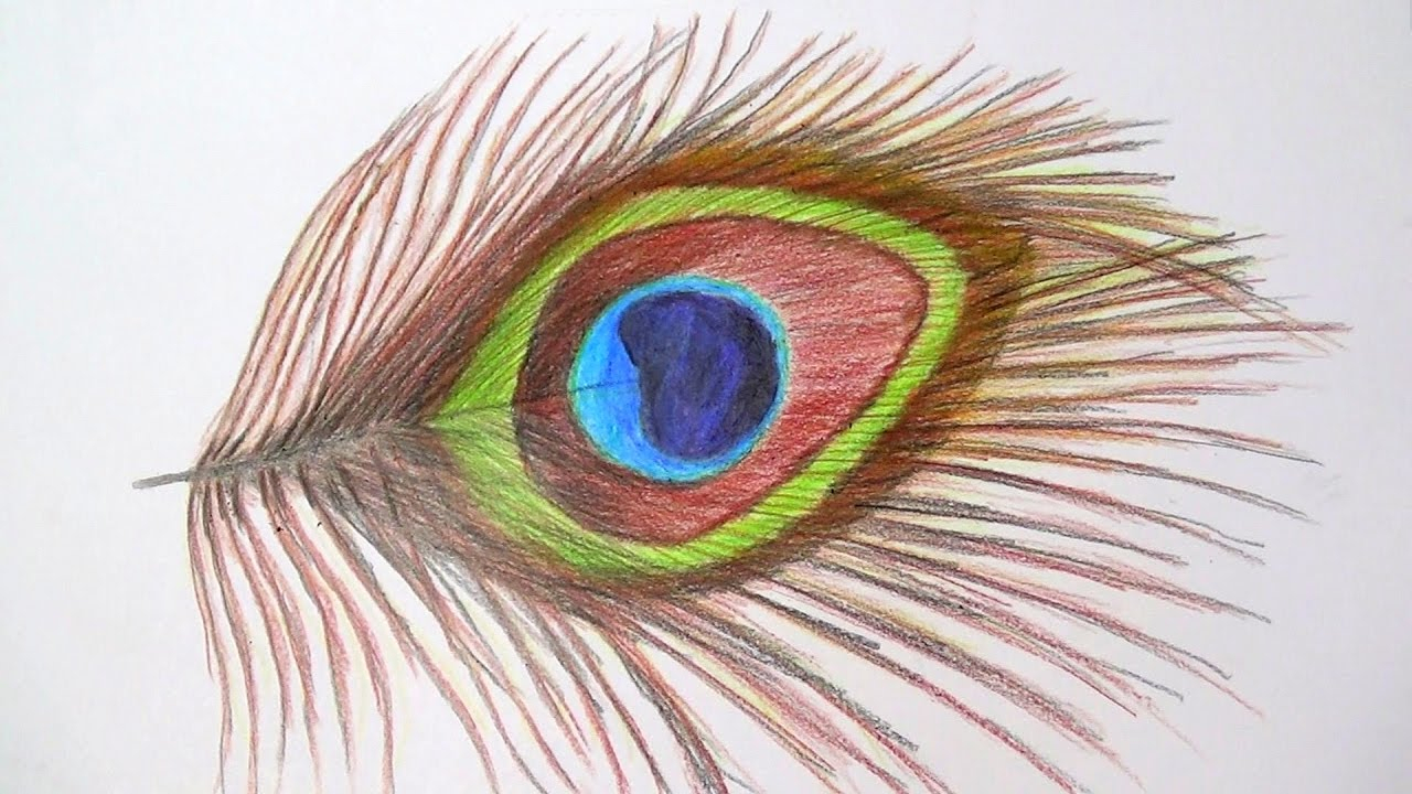 1280x720 Peacock Feather Pencil Drawing Peacock Feather Drawing With Pencil