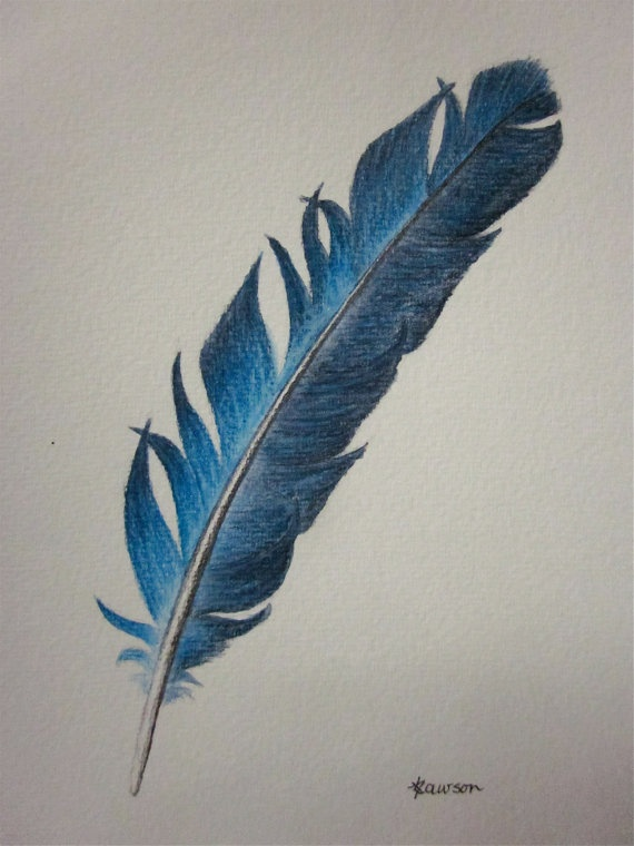 570x760 Photos Pencil Drawn Feathers,