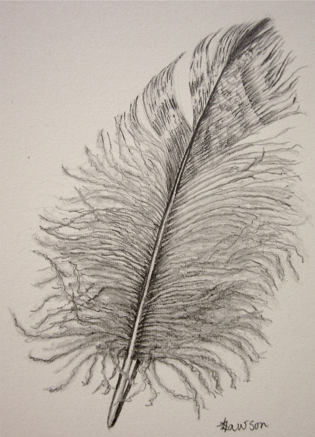 1081x1500 Drawing Realistic Feathers