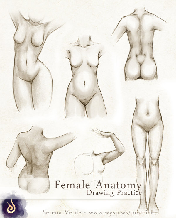 600x743 Female Anatomy Drawing Practice By Serenaverdeart