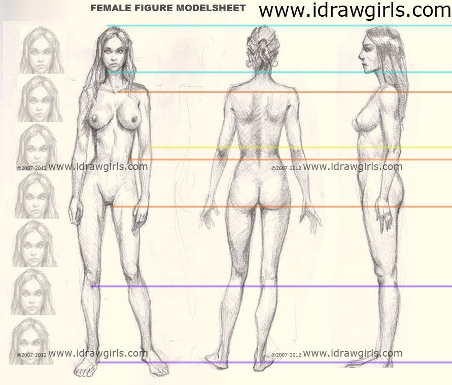 891x759 Female Figure Anatomy Proportion From Front, Side And Back View