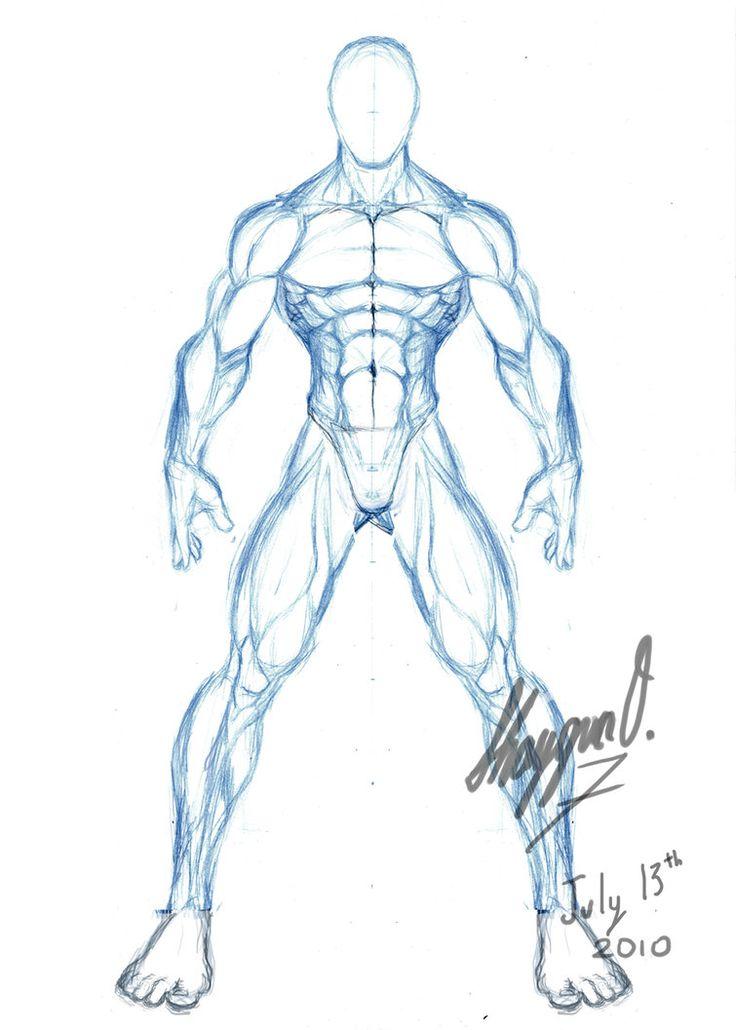 736x1030 Photos Anatomy Sketch Template,