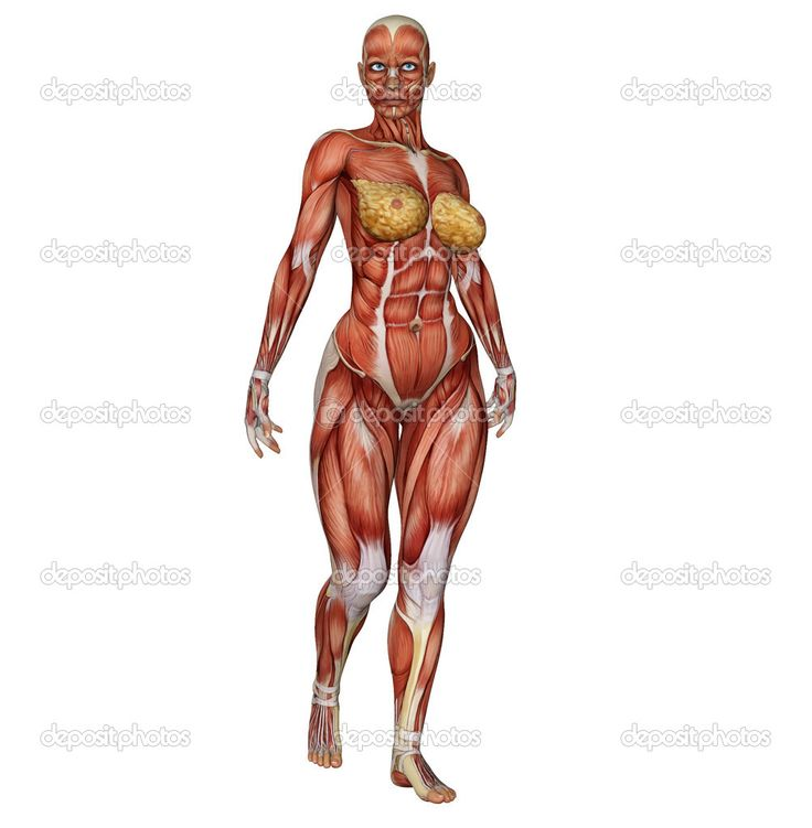 Female Bodybuilder Drawing At Getdrawings Free For Personal
