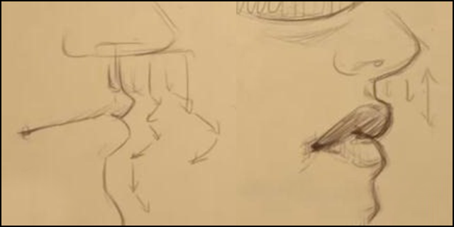 640x320 To Draw The Male And Female Mouth