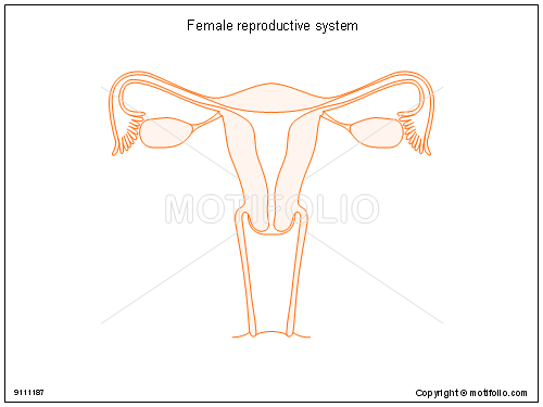 Female reproductive system drawing at getdrawings free for 500x375 female reproductive system illustrations ccuart Image collections