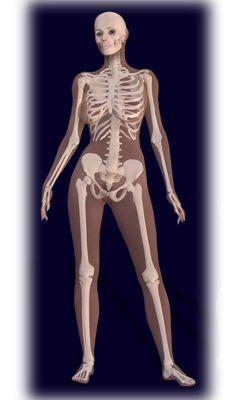 236x400 Female Human Skeleton Human Skeleton Human
