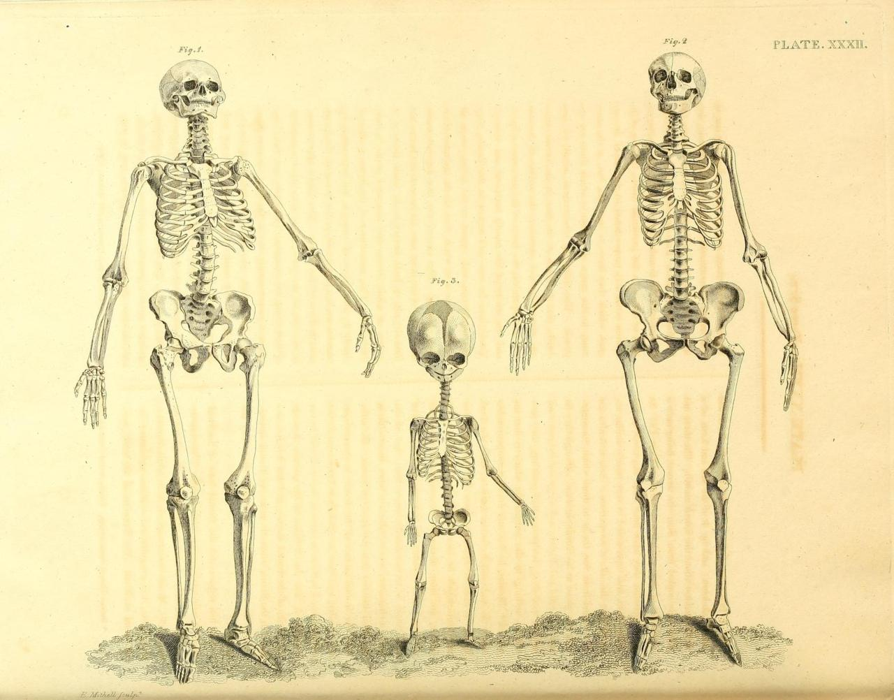 Female Skeleton Drawing at GetDrawings.com | Free for personal use ...