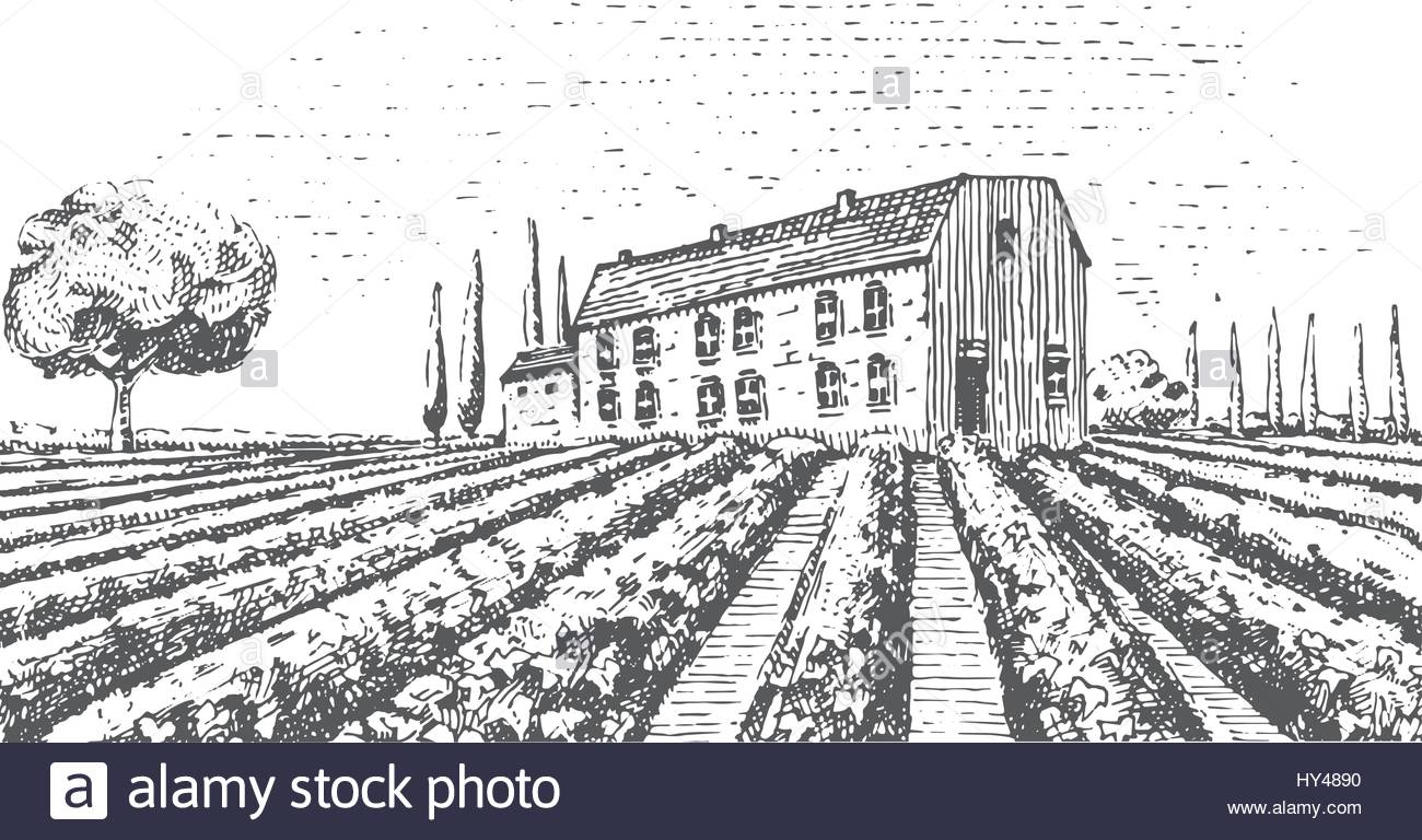 1300x768 Vintage Engraved, Hand Drawn Vineyards Landscape, Tuskany Fields