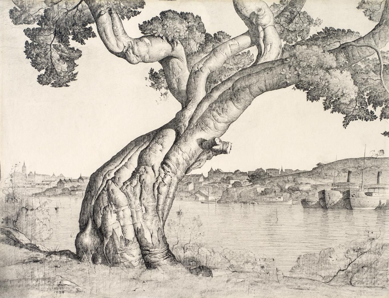 1366x1046 Lloyd Reesthis Is A Pencil Drawing Of A Fig Tree Art