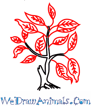 300x350 Fig Tree 04.png