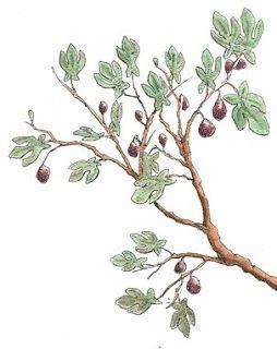 254x320 Fig Tree Drawing With Figs Tattoos Tattoo, Tatting