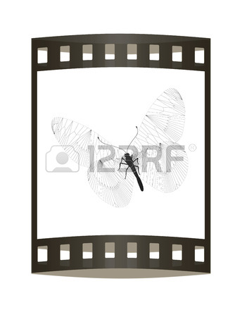 344x450 Line Butterfly Concept. 3d Illustration. The Film Strip. Stock