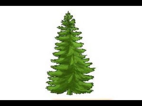 480x360 How To Draw A Pine Tree