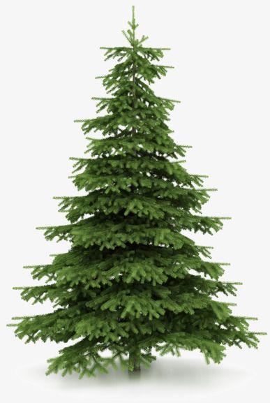 387x577 Pino De Navidad, Arbol De Navidad, Cypress, Planta Imagen Png