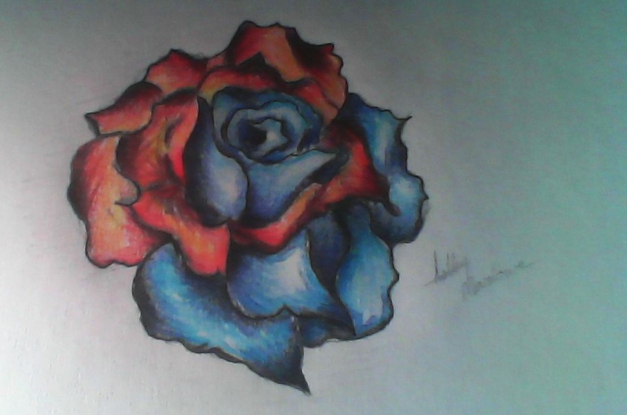 907x601 Fire And Ice Rose By Escreality Ash