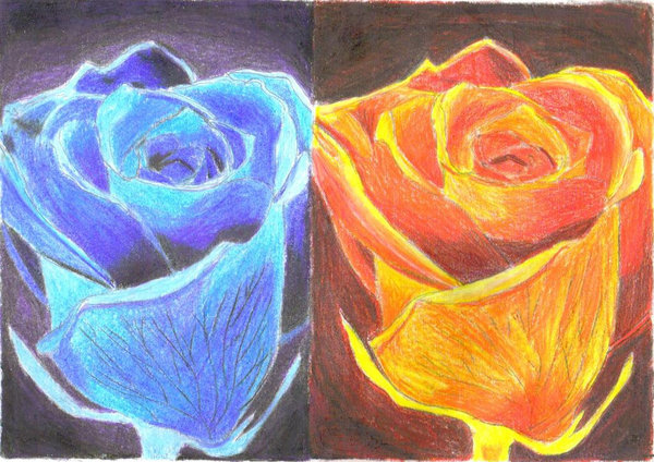 600x424 Roses Of Fire And Ice By Floral Solstice