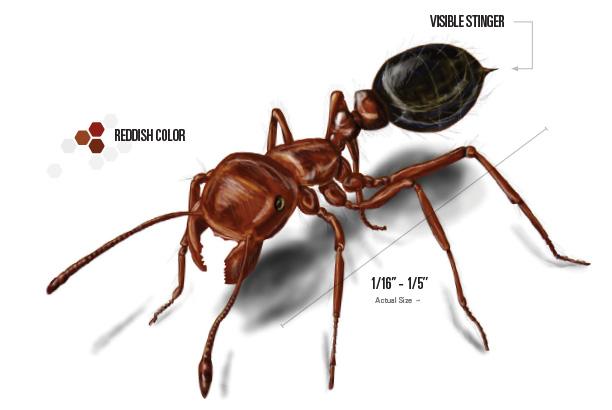 612x410 Fire Ants