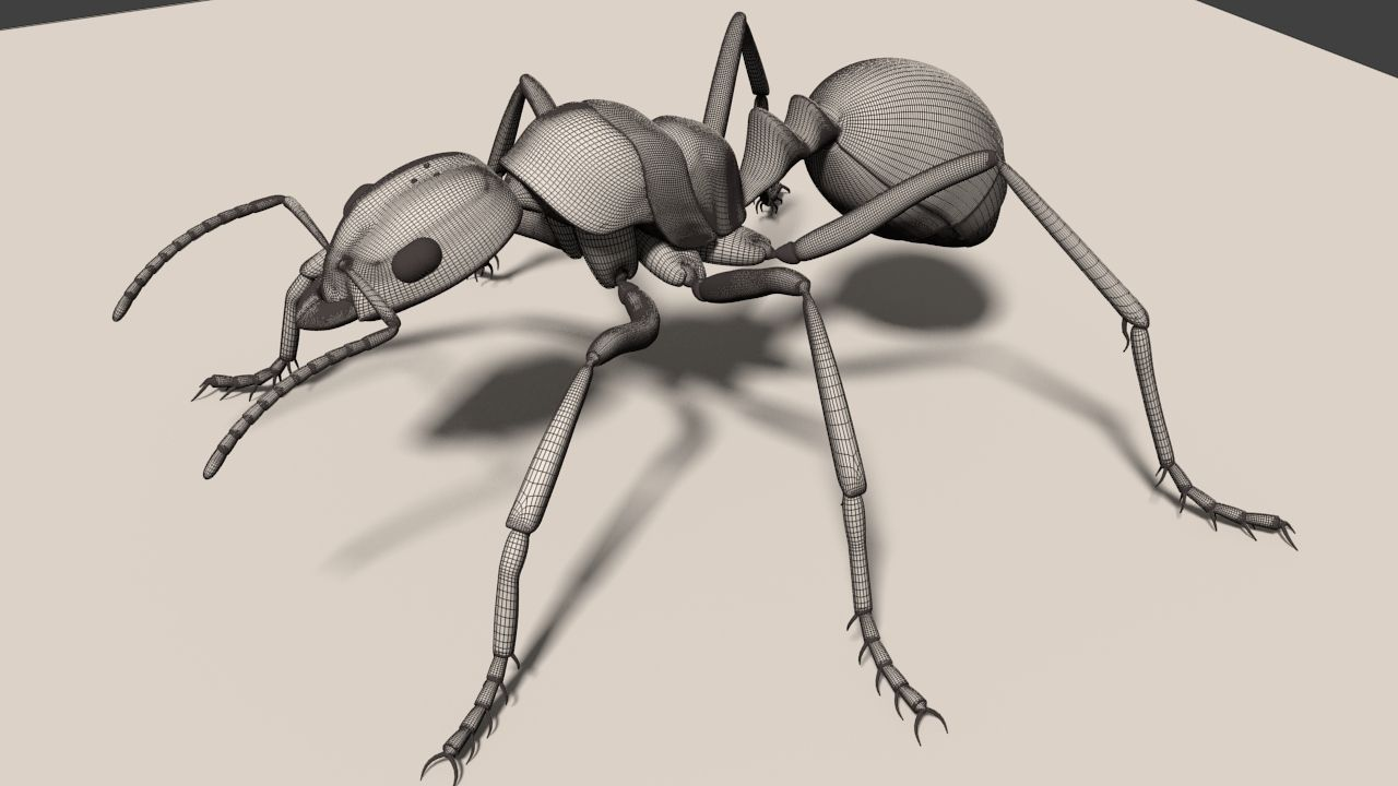1280x720 Insect 3d Model Fire Ant Cgtrader