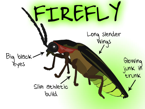 diagram of firefly trusted wiring diagrams u2022 rh sivamuni com