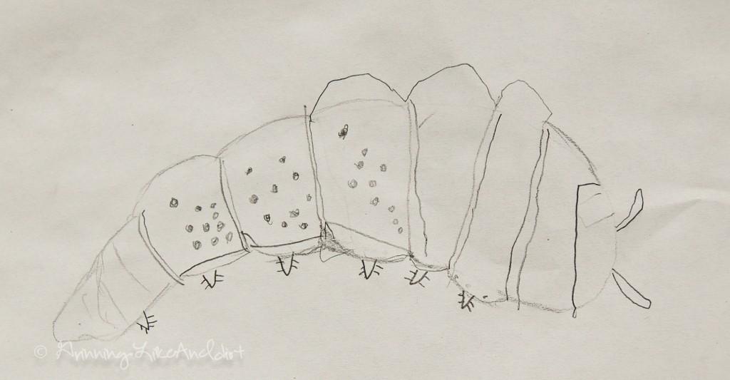 1024x533 How To Draw A Pillbug (Roly Pollie) Artist Stephanie Weaver