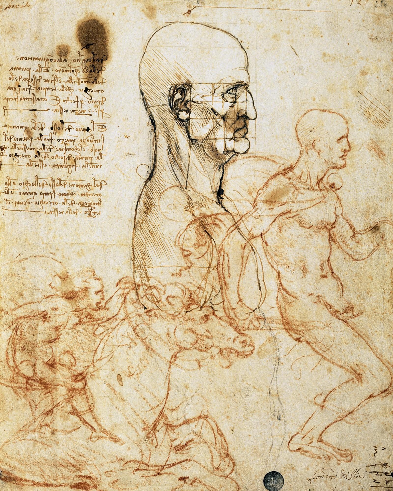 1600x1996 The Nature Of The Human Body Leonardo Da Vinci Medium