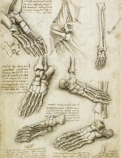 412x535 Da Vinci Anatomical Study