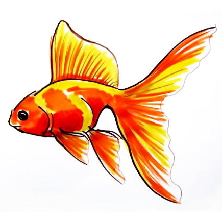 435x435 How To Draw A Gold Fish
