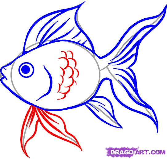 542x519 Goldfish Drawing