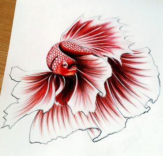 320x307 Betta Drawings On Paigeeworld. Pictures Of Betta