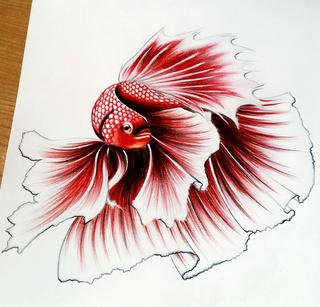 Fish Drawing In Pencil at GetDrawings.com | Free for ... Betta Fish Drawings