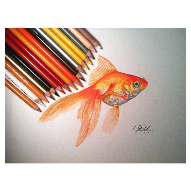 612x612 Gallery For Gt Gold Fish Drawing In Pencil Drawing